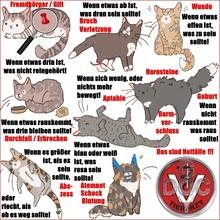 Hund Katze Heimtier Haustier Kleintier