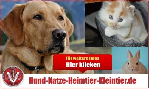 Hund Katze Heimtier Kleintier